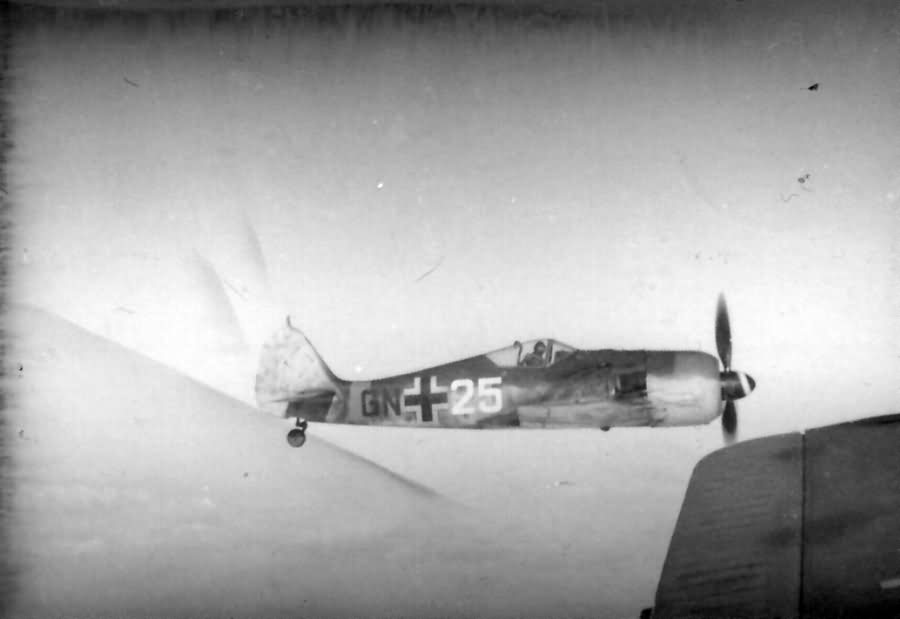 Focke Wulf Fw 190 GN 25 in flight